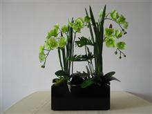 酒店客房用品 盆栽 星级酒店装饰 绿色植物 餐桌摆件 客房绿化